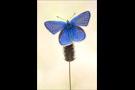 Wundklee-Bläuling 03 (Polyommatus dorylas)